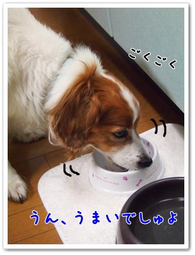 d0013149_071527.jpg