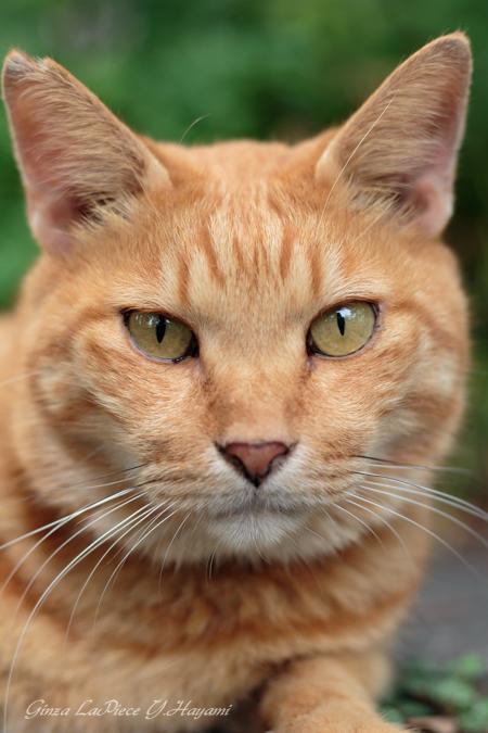 猫のいる風景 日比谷公園 憂鬱の後のチャッピー_b0133053_0204864.jpg