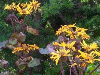 黄色の花、大集合~_e0326953_01263.jpg