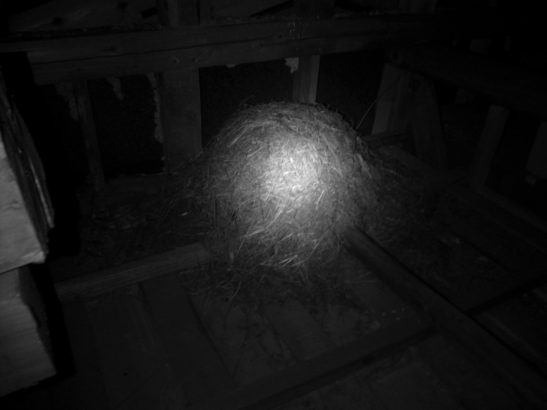 出来上がった巣 すでにあった巣_a0232906_21421928.jpg
