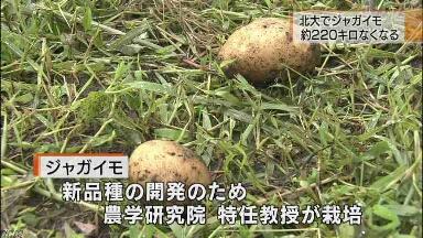 「世界よ見てるか   これが朝鮮人だ」: 日本の水害被害を韓国が大歓迎 「サル達への天罰」_e0171614_1523740.jpg