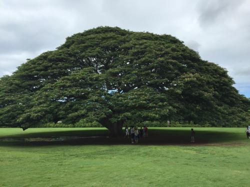 15年夏休みハワイ  7★アノ木を見たらアツアツのおやつタイム♡_d0285416_21301906.jpg