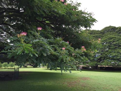 15年夏休みハワイ  7★アノ木を見たらアツアツのおやつタイム♡_d0285416_21302042.jpg