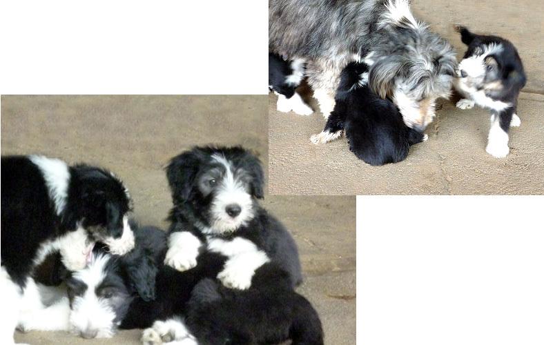 ベアデ、この夏、子犬の一日_f0211789_22012452.jpg