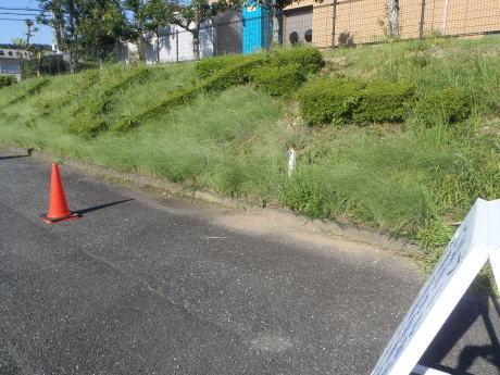 プール敷地内の草刈りを行いました。_c0184994_18283403.jpg