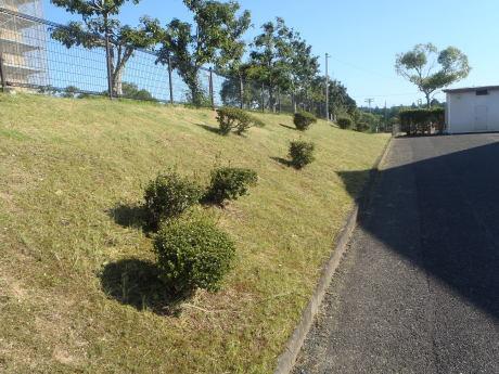 プール敷地内の草刈りを行いました。_c0184994_18404585.jpg
