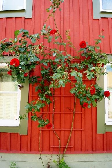 真似したい!素敵なスウェーデンのお家。_d0241813_14101615.jpg