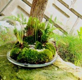 植物ワークショップ3daysのご案内_d0263815_16424851.jpg