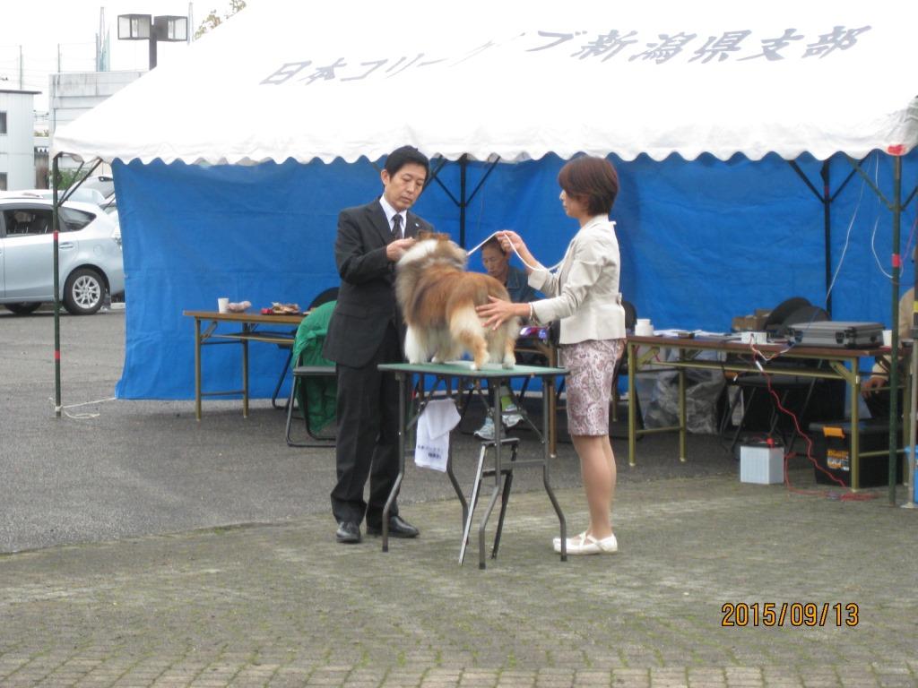 9.13 JCC  新潟展_a0139367_17225368.jpg