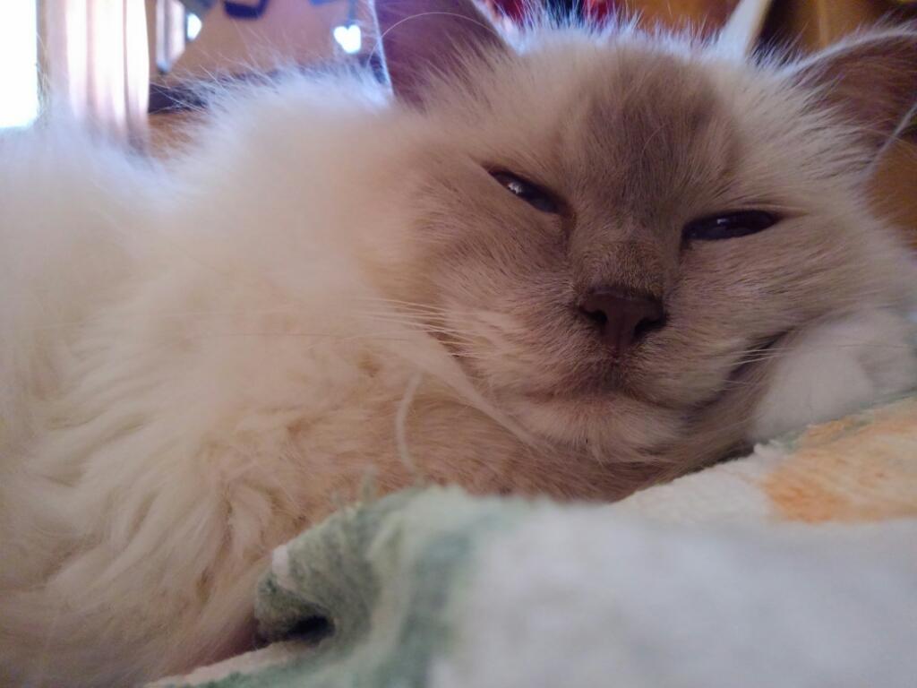 愛猫が添い寝してくれる季節到来_a0045697_22171792.jpg