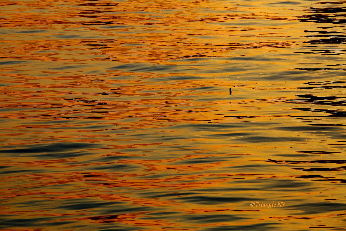 川面に浮かぶ僕の影は…_a0274805_22525489.jpg