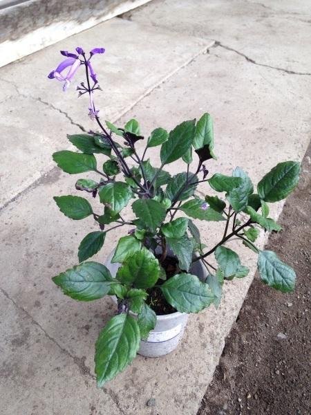 あちこちから花の苗をもらっり、あげたり…_d0322040_22020265.jpg