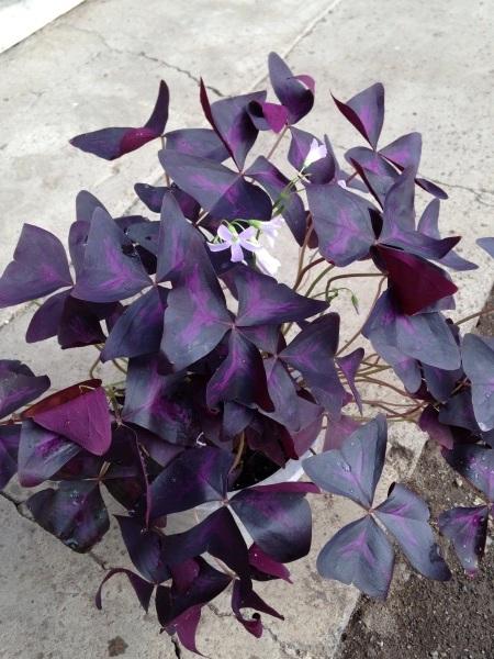あちこちから花の苗をもらっり、あげたり…_d0322040_22043006.jpg