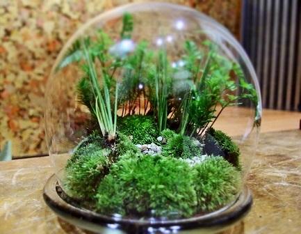 植物ワークショップ3daysのご案内_d0263815_9422183.jpg