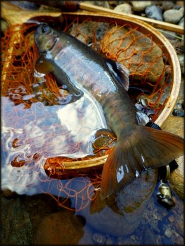 記憶に残る渓魚(さかな)_f0053342_10435135.jpg