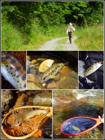 記憶に残る渓魚(さかな)_f0053342_10572658.jpg
