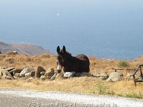 セリフォス島のラバさんに声をかけられた!_f0037264_23312247.jpg