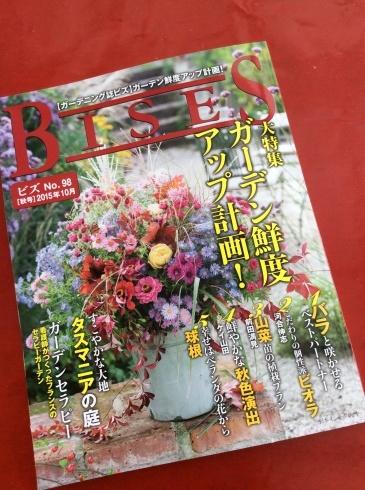 宮崎のスペシャルなビオラ達もビズ[秋号]の紙面を彩っています_b0137969_08252248.jpg