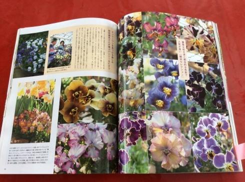 宮崎のスペシャルなビオラ達もビズ[秋号]の紙面を彩っています_b0137969_08271301.jpg