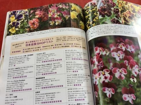 宮崎のスペシャルなビオラ達もビズ[秋号]の紙面を彩っています_b0137969_08370405.jpg