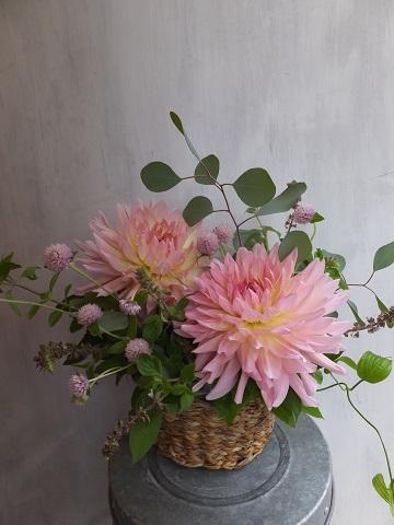 オークリーフ(敬老の日におすすめの花)_f0049672_1505120.jpg
