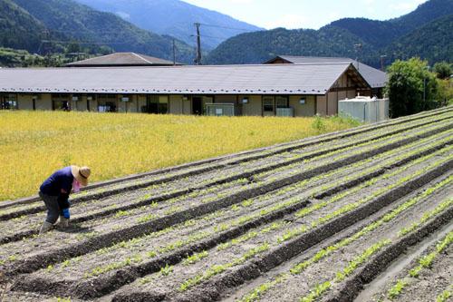 大原の里 農作業風景_e0048413_21424582.jpg
