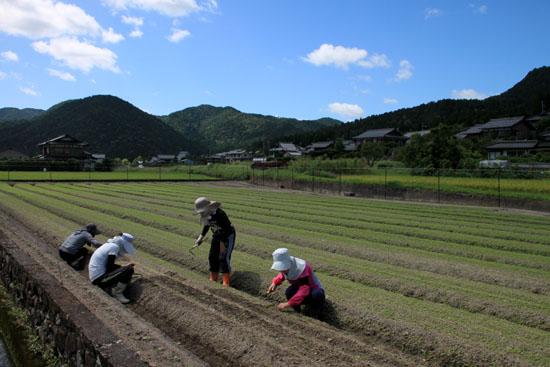 大原の里 農作業風景_e0048413_2143353.jpg
