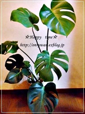 オムライス弁当とモンステラで美活~♪_f0348032_19242421.jpg