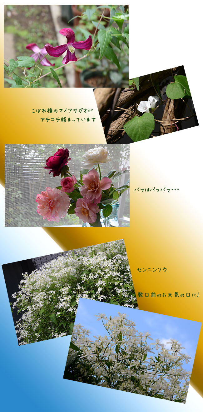 e0020954_2243535.jpg