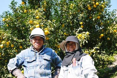 香り高き柚子(ゆず) 柚子こしょう用の香り高き『青柚子』 9月25日(金)より出荷します!!_a0254656_18373613.jpg
