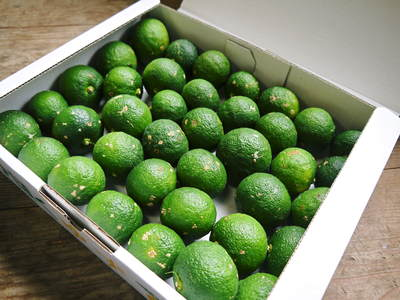 香り高き柚子(ゆず) 柚子こしょう用の香り高き『青柚子』 9月25日(金)より出荷します!!_a0254656_18483346.jpg