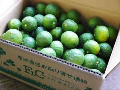 香り高き柚子(ゆず) 柚子こしょう用の香り高き『青柚子』 9月25日(金)より出荷します!!_a0254656_18531959.jpg