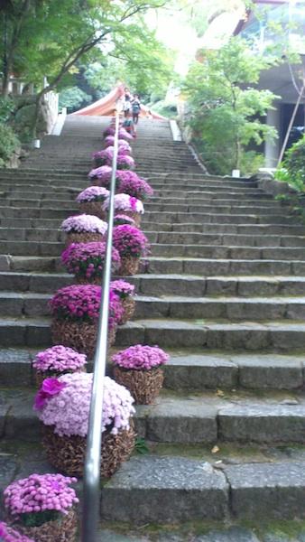 マンホールの花と神社の花_f0048597_6194172.jpg