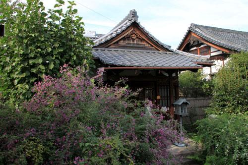 常林寺 萩が満開_e0048413_12484594.jpg