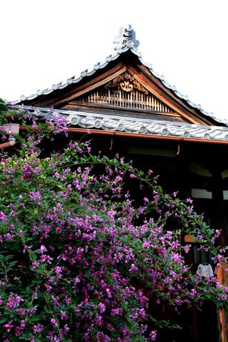 常林寺 萩が満開_e0048413_1249893.jpg