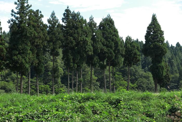 大杉の里_e0169421_220090.jpg