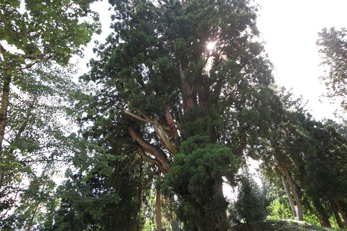 大杉の里_e0169421_220193.jpg