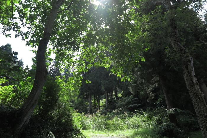大杉の里_e0169421_220283.jpg