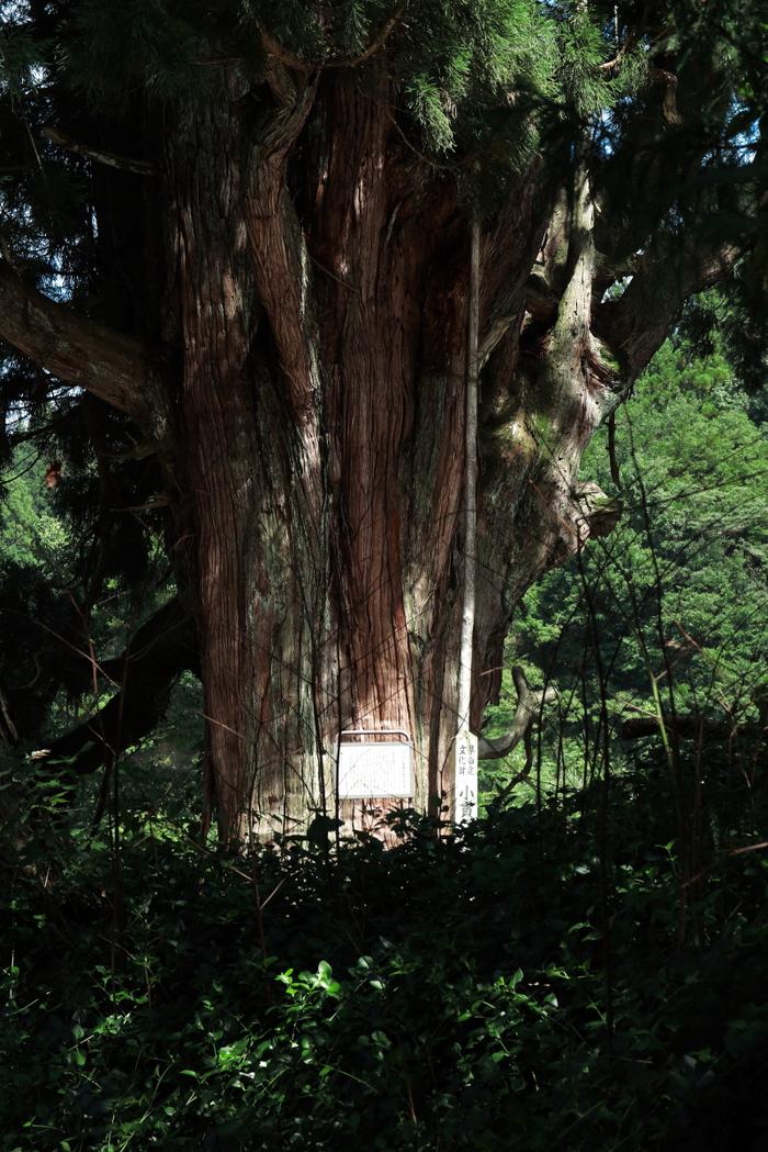 大杉の里_e0169421_220453.jpg