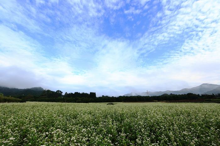 蕎麦の花 満開_a0294534_203528.jpg