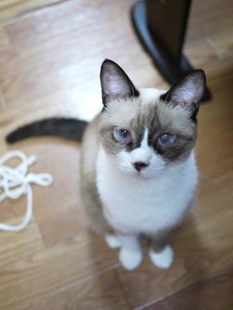 猫のお留守番 クーちゃん編。_a0143140_23211438.jpg