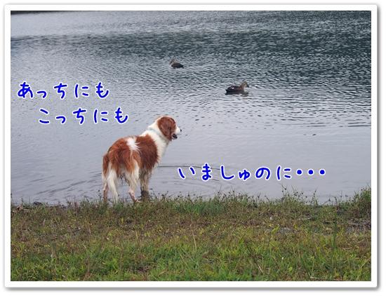 d0013149_1244680.jpg