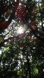 木々の精気に包まれている熱田神宮_f0008555_1911721.jpg