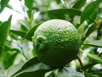 香り高き柚子(ゆず) 柚子の匠!生産農家さんが作る手作り「柚子こしょう」のレシピ!!_a0254656_18385482.jpg
