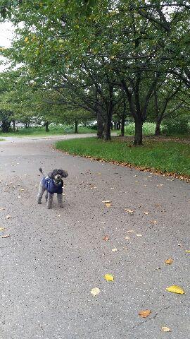 秋の小さなピクニック_c0231772_1741726.jpg