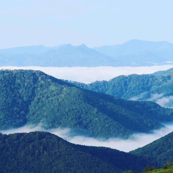 北海道 夏旅 Day4 雲海テラス_c0116778_20044075.jpg