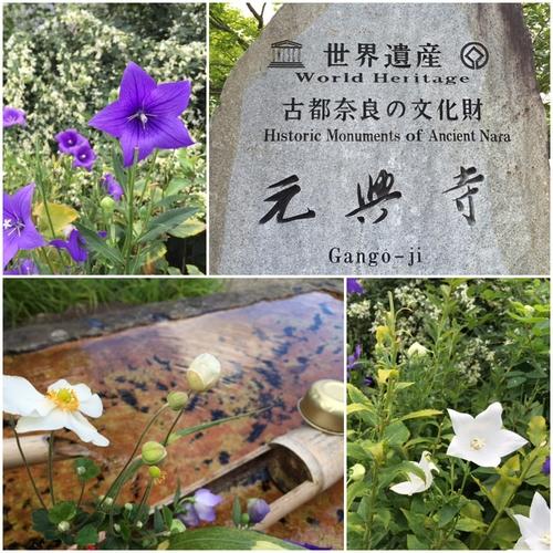 元興寺の境内は・・・花盛り_a0326106_2125189.jpg