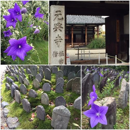 元興寺の境内は・・・花盛り_a0326106_21253849.jpg