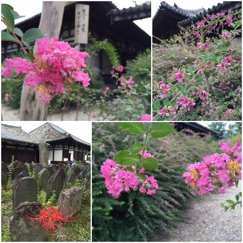 元興寺の境内は・・・花盛り_a0326106_21254889.jpg
