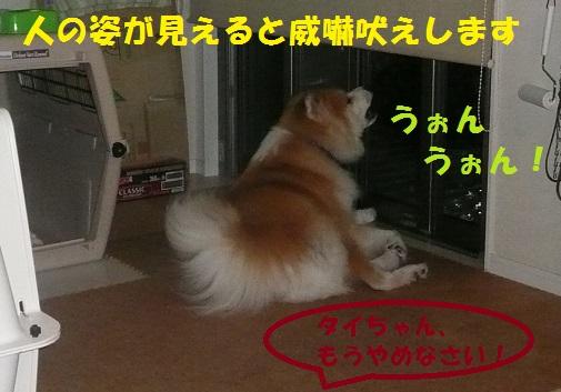 f0121712_10193774.jpg